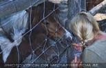 Ponys mit Karotten füttern