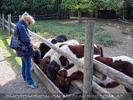 Pony Fütterei