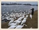 Wasservögel füttern