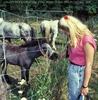 Hallo kleines Pony