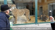 Geparden Bild