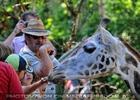 Giraffen Herde 1