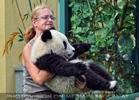 Großer kleiner Panda 6
