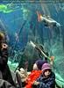 Im Aquarium Tunnel
