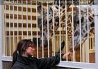 Im Giraffenhaus 3