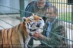 Tigeranlage Eröffnung 17 (Karl Auinger)