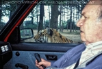 Bei den Tigern