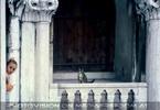 Katzenversteck