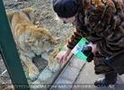Löwen 10