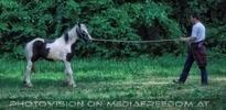 Longline horse