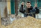 Geparden Kontakt
