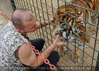 Mit den Tigern 32