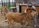 Mit Löwen und Tiger 02