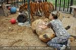Mit Löwen und Tiger 05