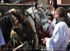Pferde Segnung in Maria Lankowitz 11