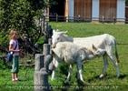 Am Hof 08 - Weiße Esel