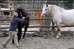 Pferdepfleger