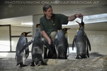 Pinguin Fütterung