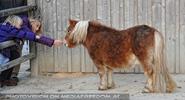 Pony Fütterung