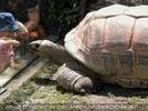 Riesenschildkröte mit Kindern