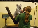 Koala wiegen