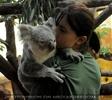 Koala gut behütet