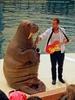 Walrus Show 08
