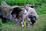 Waschbären Fütterung 7