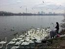 Wasservögel werden gefüttert