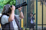 Tierfotografen 11