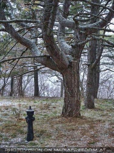 Hydrant und Baum