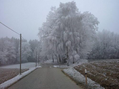Baum mit Eiskristallen