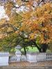 Herbst im Burggarten