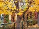 Herbst im Zoo 1