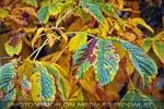Herbst im Zoo 4