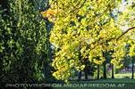 Im Schlosspark 09