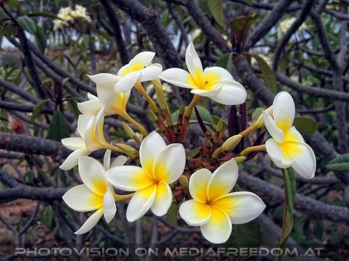 Exotische Pflanzen 09