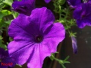 Schoene Blume