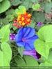 Exotische Pflanzen 02