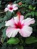 Exotische Pflanzen 03