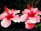 Exotische Pflanzen 04
