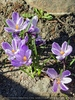 Frühlingserwachen 12