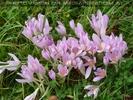 Prächtig violett
