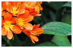 Subtropische Pflanze