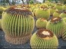 Exotische Pflanzen 05