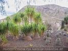 Exotische Pflanzen 07