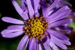 Pflanze unbekannter Art