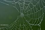 Spinnenetz