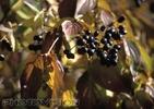 Herbstzeitüberlebende