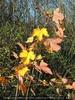 Herbstler
